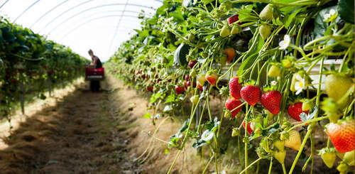 Организация агробизнеса: аргентинский опыт внедрения новых технологий